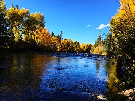 Image of Fall Colors on the Blue River in Silverthorne