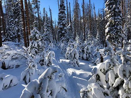 Image of Cross Country Skiing in Summit County